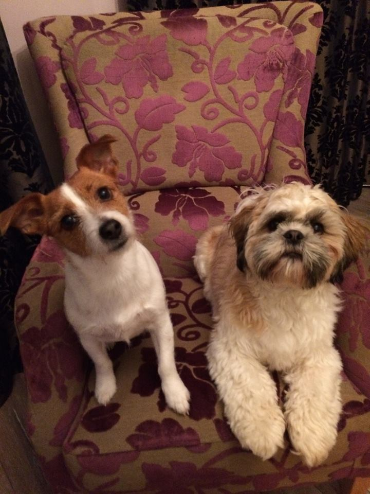 Lucy & Cookie on a Harvard Chair